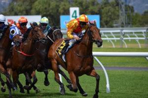 Horse Leading in Flat Race