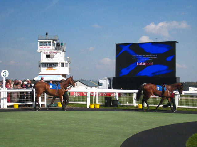 Horses in the Paddock at Exeter Racecourse