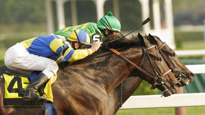 Horse Race Head to Head
