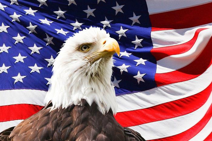 USA Flag and Eagle