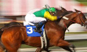 Horses Blurred Racing Neck and Neck