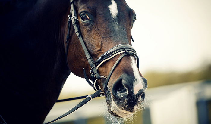 Horse Facing Camera