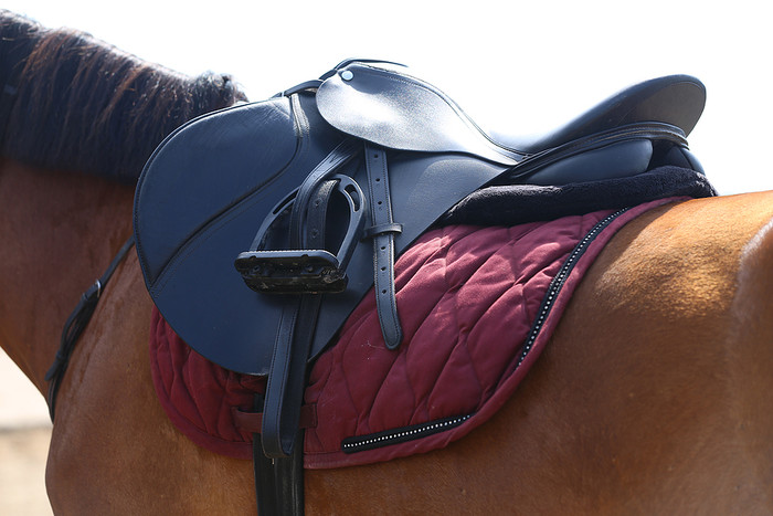 Saddle on Bay Horse