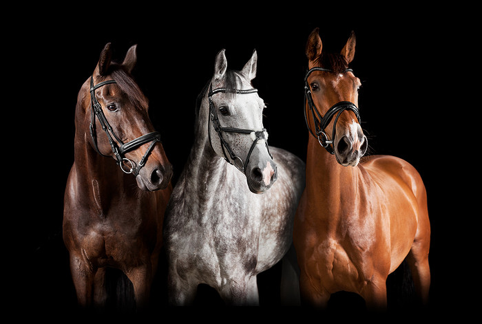 Bay, Grey, and Chestnut Horses