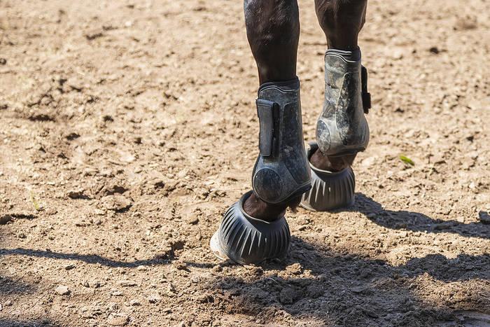 Horse Leg Protection