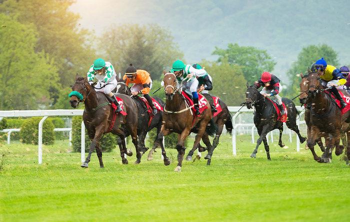 Horse Race Field on Turf