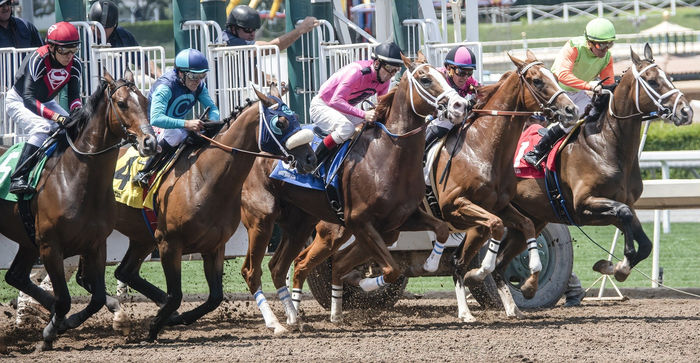 Horses Starting a Race on Dirt