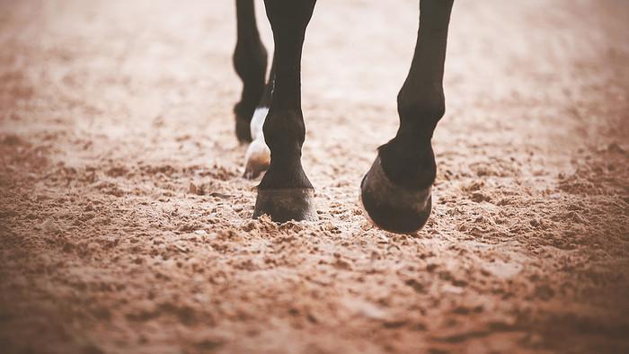 Horse Walking Across Sand