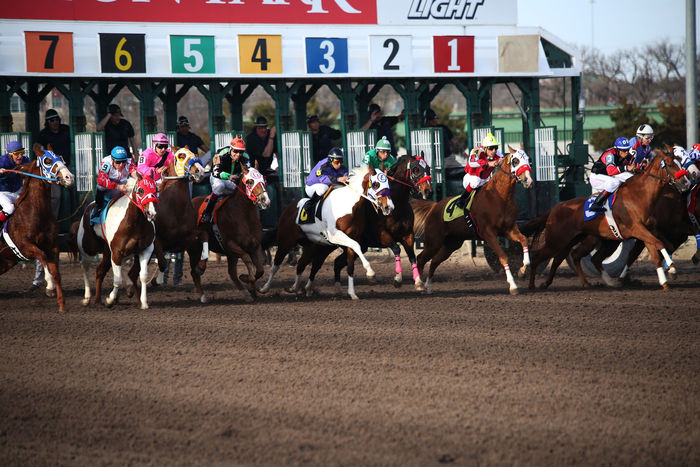 Horses Jumping Out of Starting Gate on Dirt