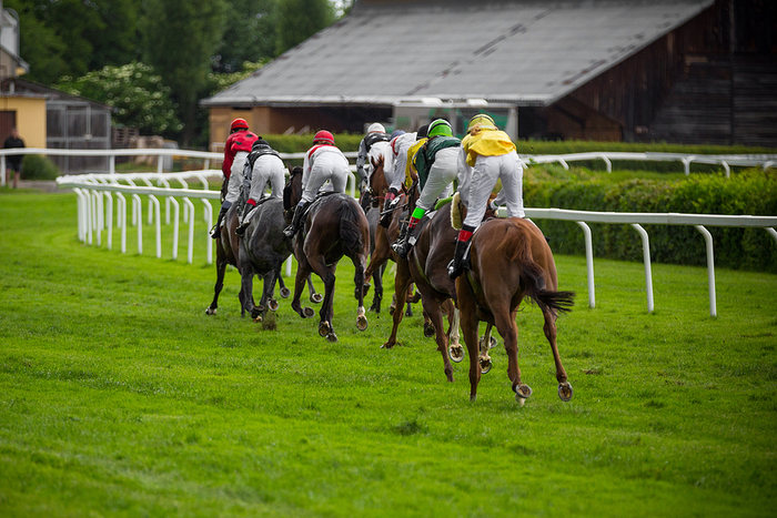 Line of Horses Racing on Turf