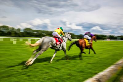 Blurred Grey and Bay Horses Racing