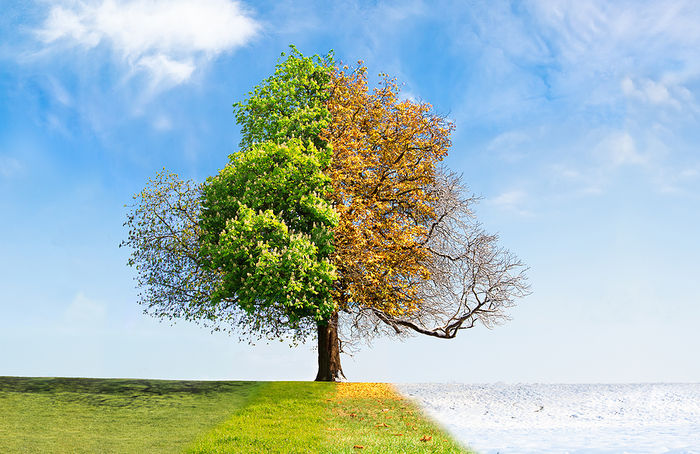 Tree Showing All Four Seasons