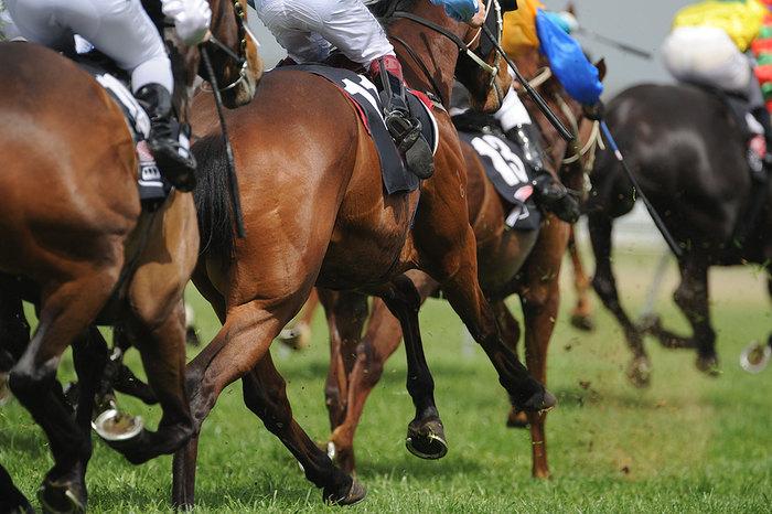 Field of Horses in Turf Race