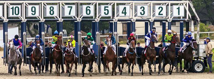 Horse race starting stalls