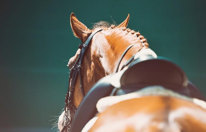 Chestnut Horse with Saddle in Sunshine