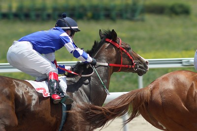 Horse Race Finish Close Up